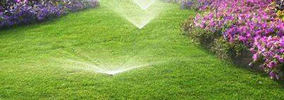 Sfaturi de ingrijire a spatiului verde din gradina ta featured image